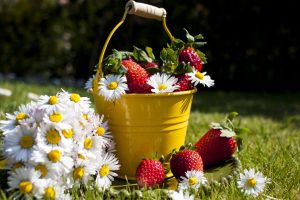 fraise-pot-garni